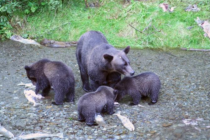 bear_08.jpg