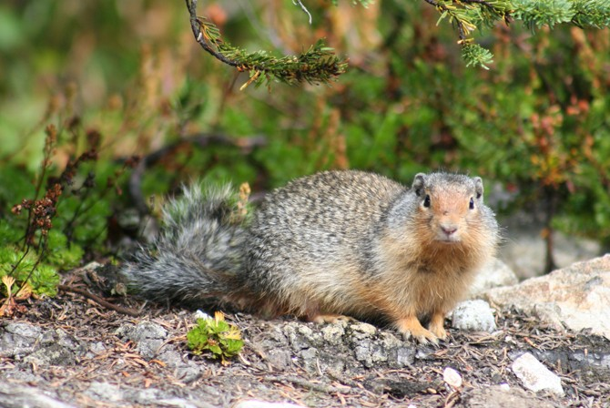 squirrel_04.jpg
