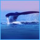 whale_site_800x800.jpg