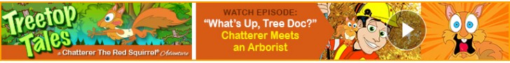 "Watch: ""What's Up, Tree Doc?"" - ""Treetop Tales"" – a Chatterer the Red Squirrel™ Adventure"