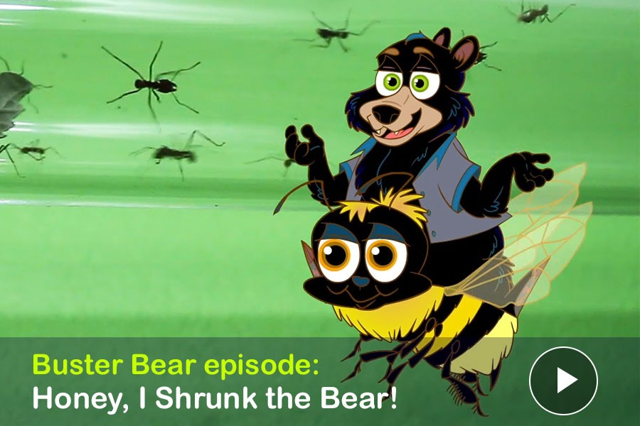 "Watch: Buster Bear Episode: ""Honey, I Shrunk the Bear! Buster Buzzes Through the Victoria Bug Zoo"""