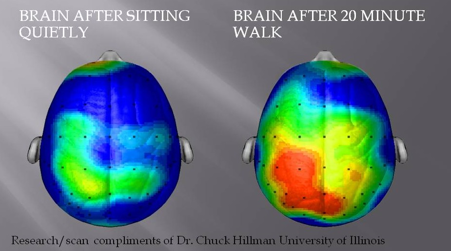 Brain on exercizse.png