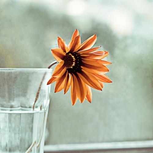 daisy-print-etsy-my-little-pixels-e1373685590823.jpg