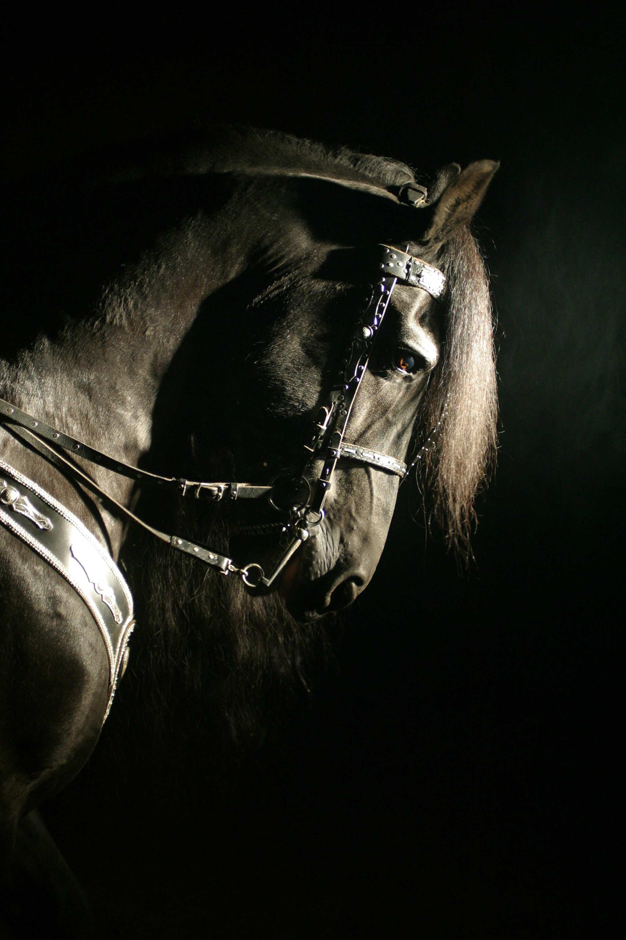 GOTRH black horse head.JPG