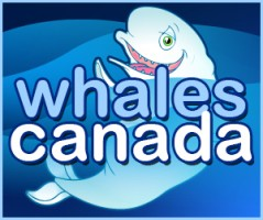 whale_sbtn_300x250.jpg