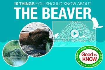 gtk-beaver.jpg